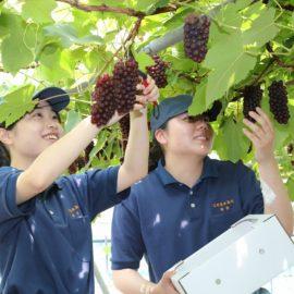 食品科学科:果樹・流通コース