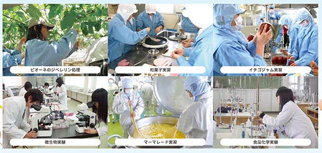 食品科学科の特徴2