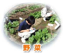 野菜(科目)