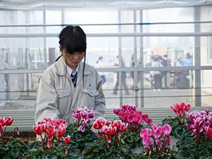 草花の栽培