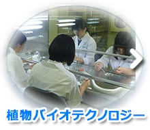植物バイオテクノロジー(科目)