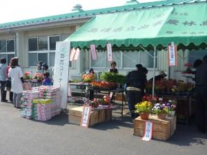 草花苗の販売