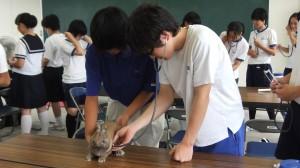 動物の健康診断