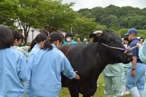 和牛団体戦