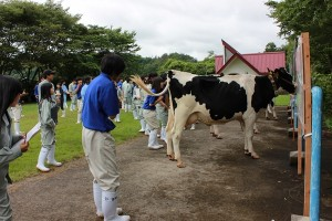 乳牛個人戦