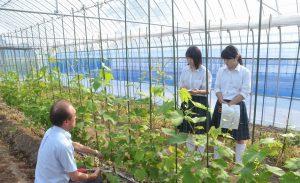 【食品科学科】ぶどう苗の管理指導について