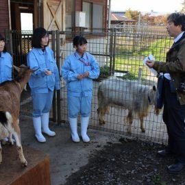 【動物科学科】ヤギのしつけプロジェクトが取材を受けました!!