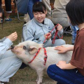 【動物科学科】移動動物園を開催しました。