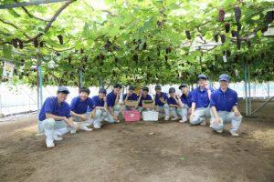 【食品科学科】令和元年度ぶどう収穫体験の様子