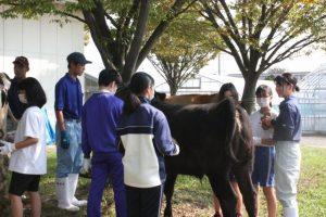 牛の飼育管理