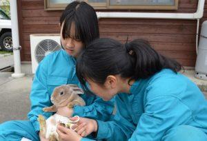 ウサギの爪切り