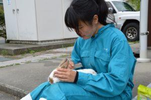 ウサギのブラッシング