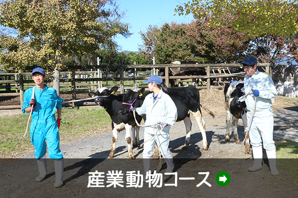 産業動物コース