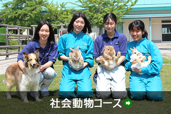 社会動物コース