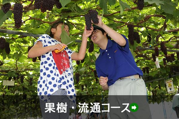 果樹・流通コース