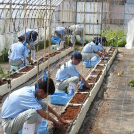 【植物科学科】1年生の夏季休業中の実習を行いました!