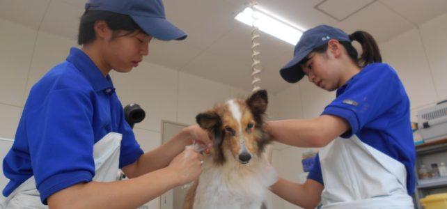 【動物科学科】3年生総合実習~犬のシャンプー~