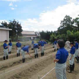 【環境科学科】ハクサイとダイコンの栽培➀