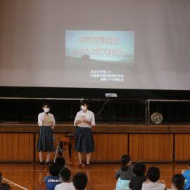 【植物バイオ】長浜小学校においてハマボウフウ勉強会を行いました!