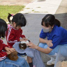 【動物科学科】ふれあい動物広場での交流