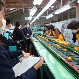 ひらた柿選果場・加工施設の視察について