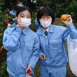 【食品科学科】ミカンの収穫と販売