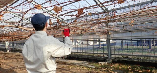 【食品科学科】一人一樹木の管理スタート
