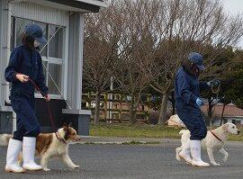 【動物科学科】2年生総合実習「犬のリーダーウォーク」