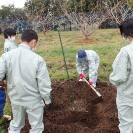 【食品科学科】果樹の苗木を定植しました!