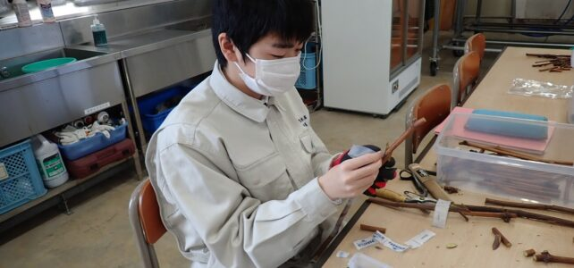 【食品科学科】接ぎ木実習の様子