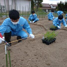 【環境科学科1年】スイートコーンの栽培2