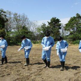 【環境科学科1年】スイートコーンの栽培1