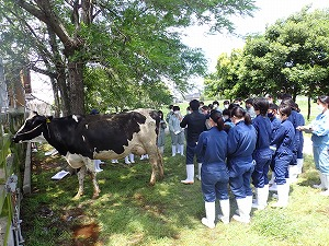 【動物科学科】家畜審査競技県大会に向けて勉強会が始まりました。
