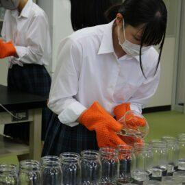 【植物バイオ】1年生 初めてのMS培地作成!