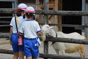 【動物科学科】動物広場の見学に来校されました。