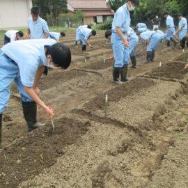 【環境科学科1年】ハクサイ、ダイコンの栽培1