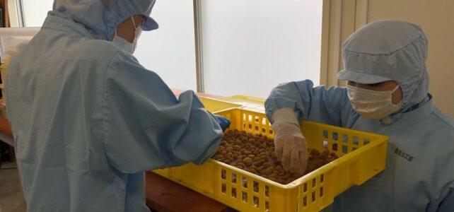 【食品科学科】果物を利用した加工品作り ~一次加工(レーズン)編~【 #6次産業化シリーズ】